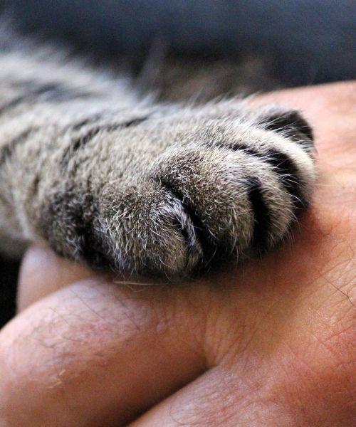 cat euthanasia