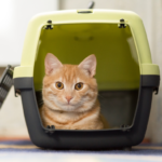 cat in the carrier